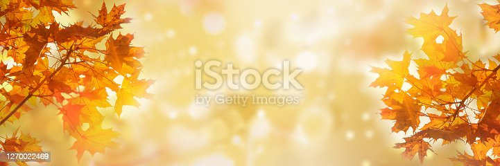 istock Golden yellow orange red maple leaves close-up on the blurred background 1270022469