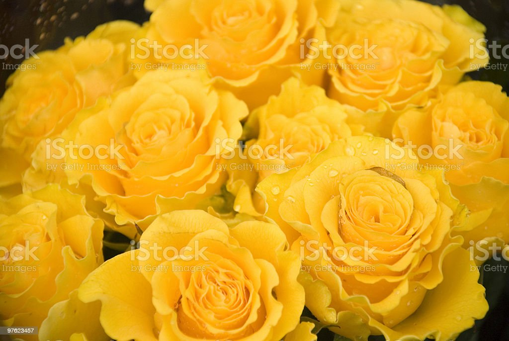 Golden Yellow Rose Bouquet royaltyfri bildbanksbilder