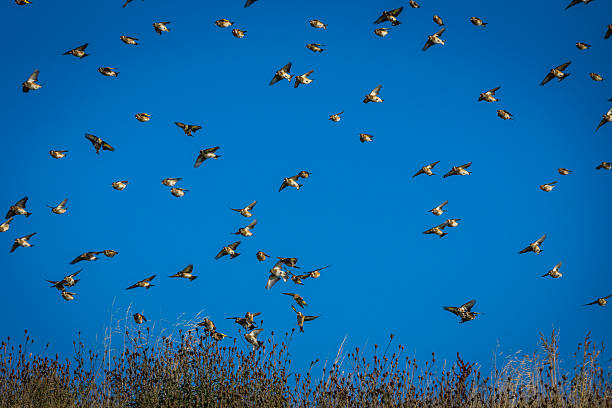 Goldfinches stock photo