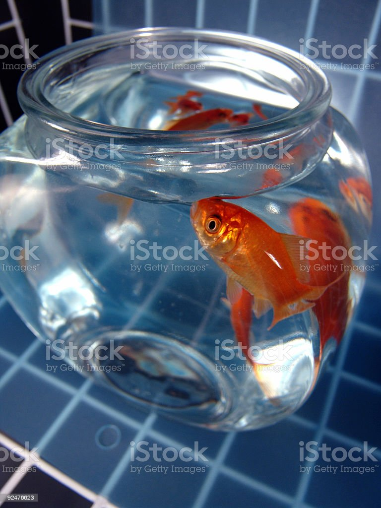 Goldfish Aquarium royalty-free stock photo