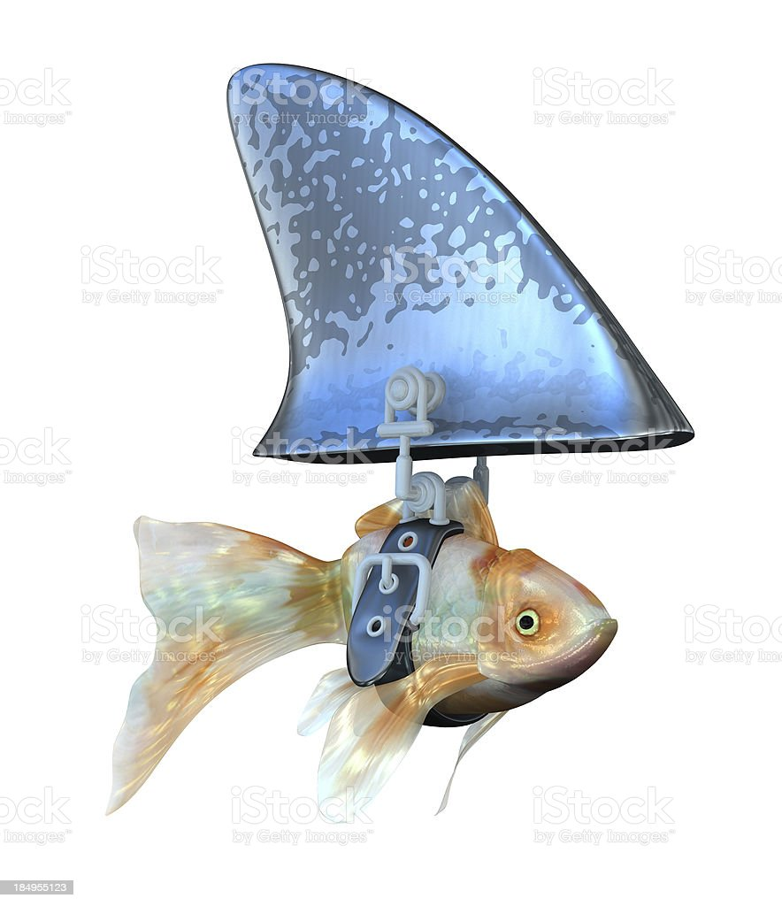 Goldfish disguised as a Shark stock photo