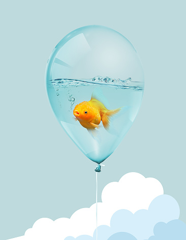 istock Goldfish fly in balloon . Mixed media, Gold fish swimming in blue balloons on blue sky with