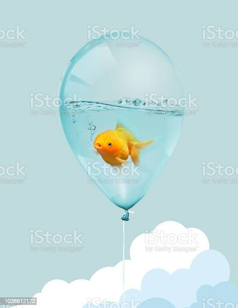Goldfish fly in balloon mixed media gold fish swimming in blue on picture id1038612172?b=1&k=6&m=1038612172&s=612x612&h=liwytqxoiedzcyhj jh8ffvn4sydsqjot0gzymycj9c=