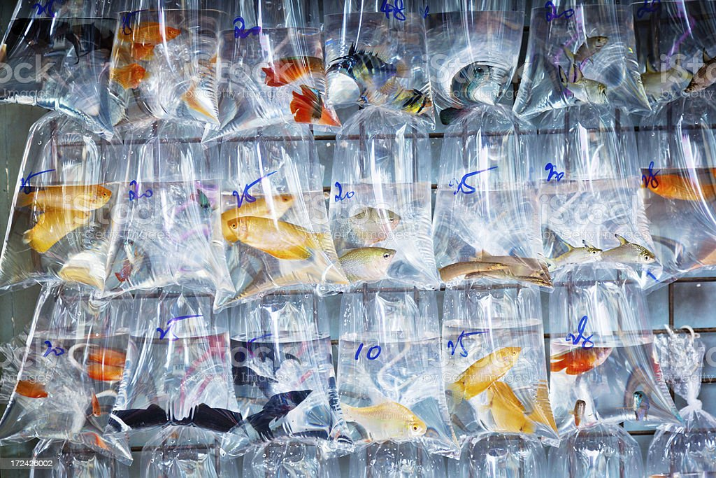 goldfish for sale at a market royalty-free stock photo