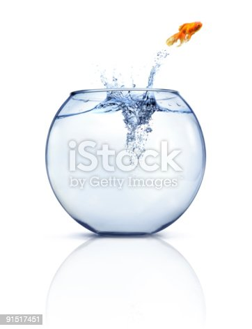 istock Goldfish gains freedom by jettisoning out of clear fishbowl 91517451