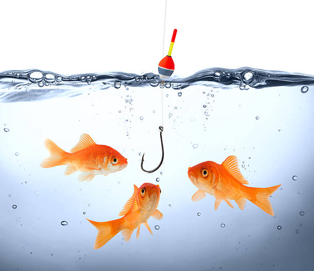 Goldfish gathered around dangling fish hook concept deception and stupidity - underwater fishing hook stock pictures, royalty-free photos & images