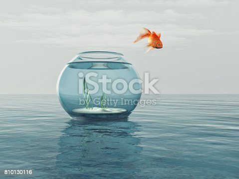 istock Goldfish in a bowl jumping 810130116
