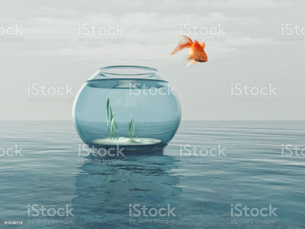 Goldfish in a bowl jumping stock photo