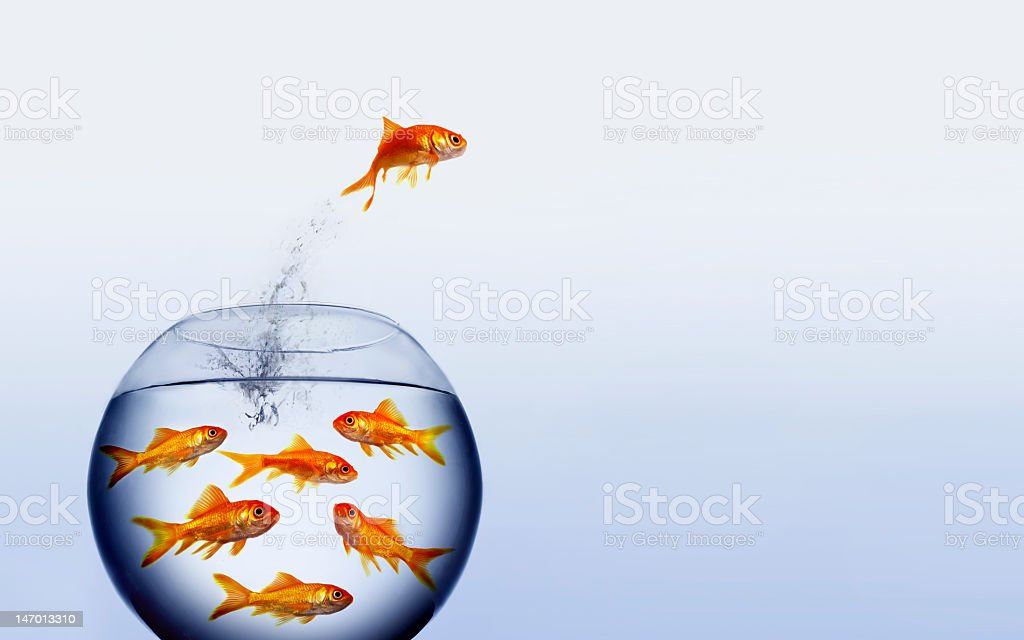 Goldfish in a bowl with one jumping out stock photo