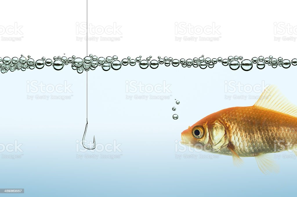 goldfish in an aquarium watching a hook stock photo