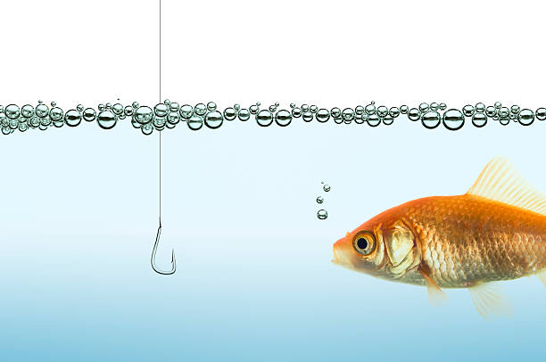 goldfish in an aquarium watching a hook goldfish in an aquarium watching a hook fishing hook stock pictures, royalty-free photos & images