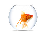 Goldfish isolated on a white background