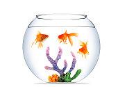 Three Goldfish in fishbowl XXXL