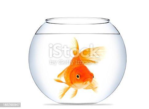 Goldfish isolated on a white background