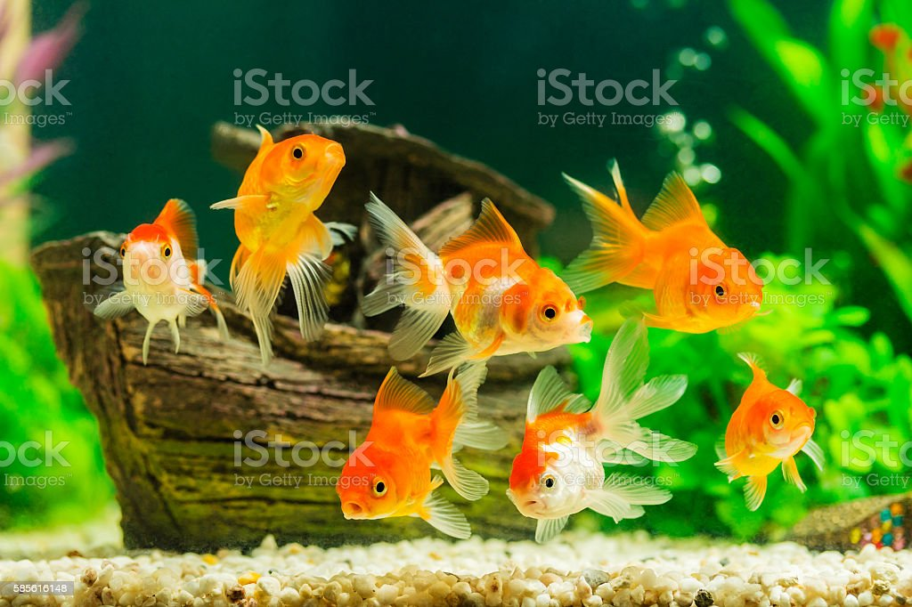 top 60 fish tank stock photos pictures and images istock rh istockphoto com