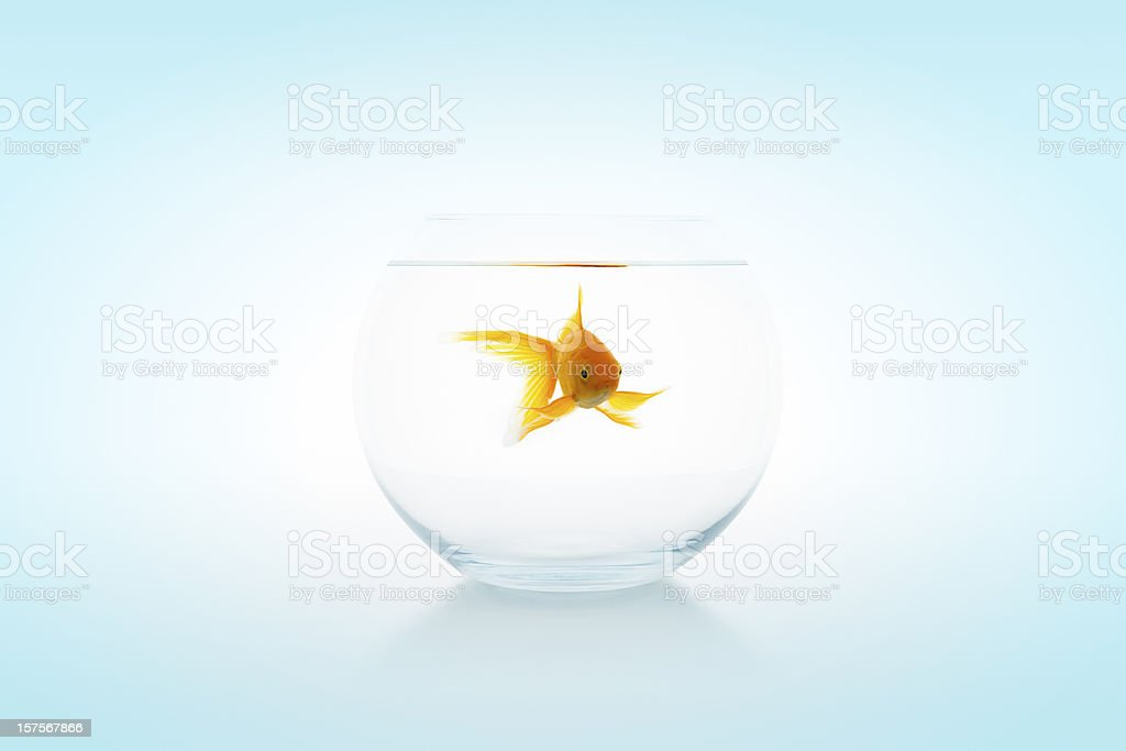 Goldfish in bowl stock photo