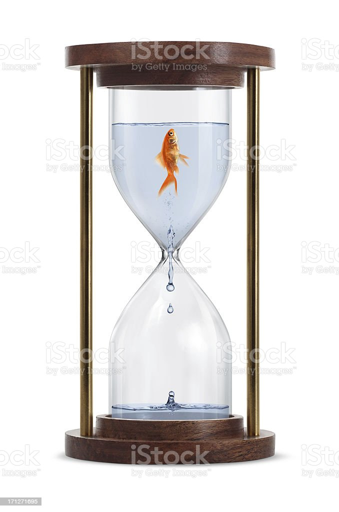 Goldfish in Hourglass Goldfish trapped in hourglass. Isolated on white background. Animal Stock Photo