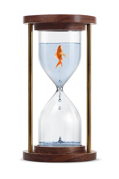 Goldfish in Hourglass Goldfish trapped in hourglass. Isolated on white background. water wastage stock pictures, royalty-free photos & images