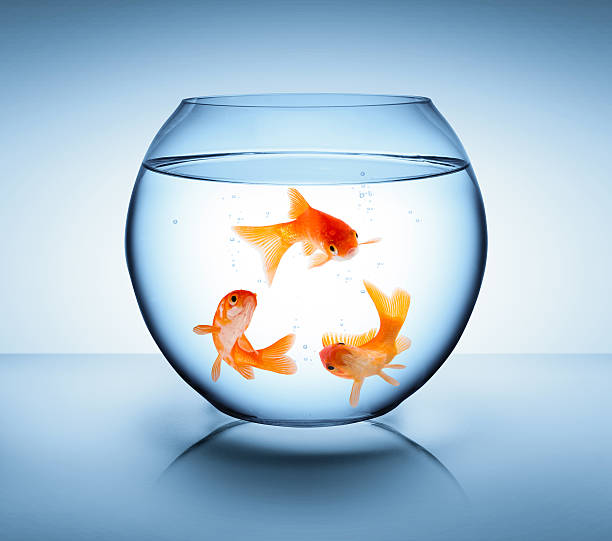 goldfish in recycle concept - cyclic stock pictures, royalty-free photos & images
