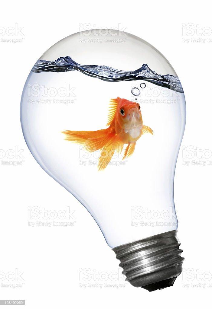 Goldfisch in eine Glühbirne Lizenzfreies stock-foto