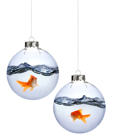 The Christmas ornaments are isolated on a white background. No animals were harmed in the making of this photo.