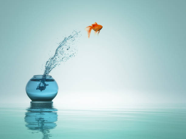 goldfish jump from bowl to the sea. This is a 3d render stock photo