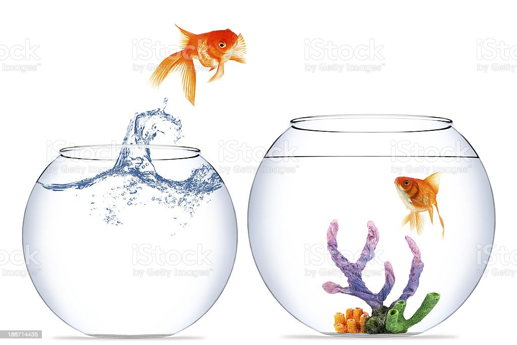 A goldfish jumping between two fish bowls stock photo for Fish bowl cups