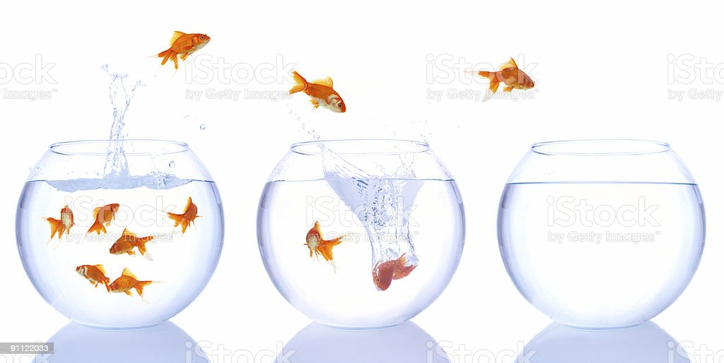 Goldfish jumping from one bowl to another stock photo