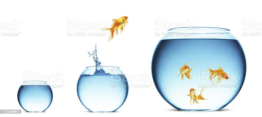 Goldfish jumping from one fish bowl into another royalty-free stock photo