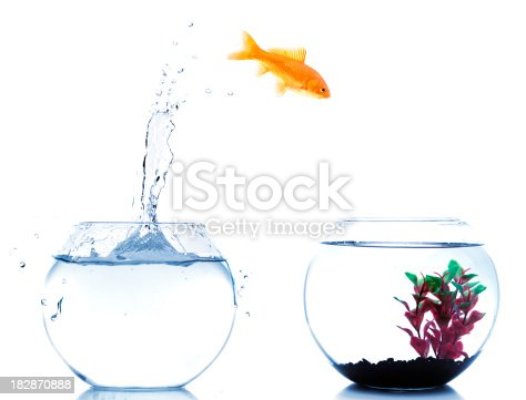 istock goldfish jumping off to new fishtank 182870888