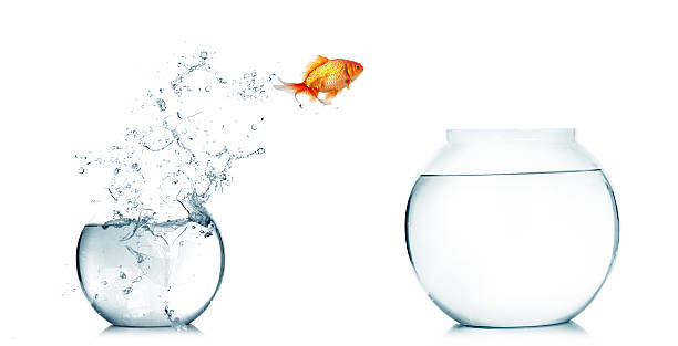 Royalty free fishbowl pictures images and stock photos for Bocal a poisson design