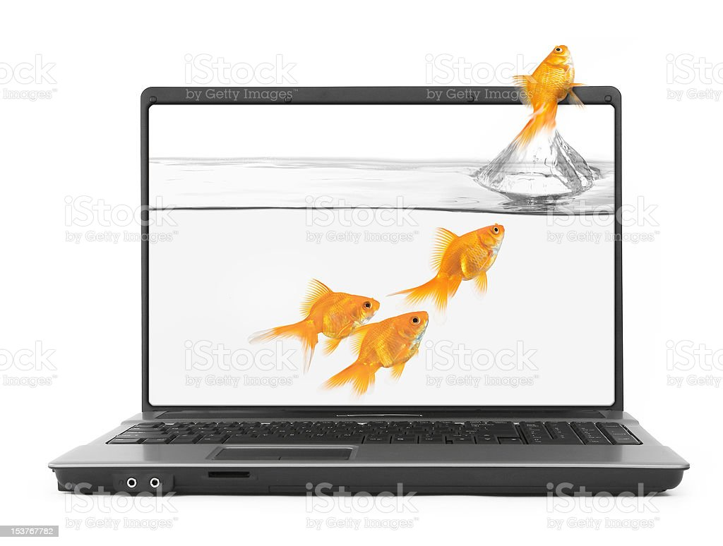 goldfish jumping out of the notebook stock photo