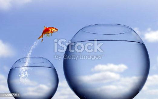 istock goldfish jumping out of the water 145852914