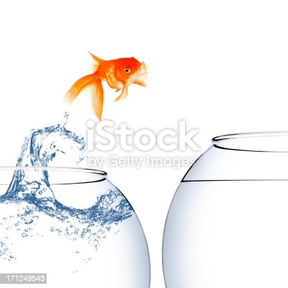 istock Goldfish jumping out of the water 171249543