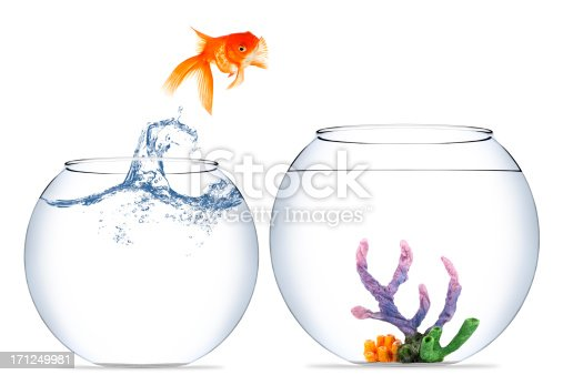 istock Goldfish jumping out of the water 171249981