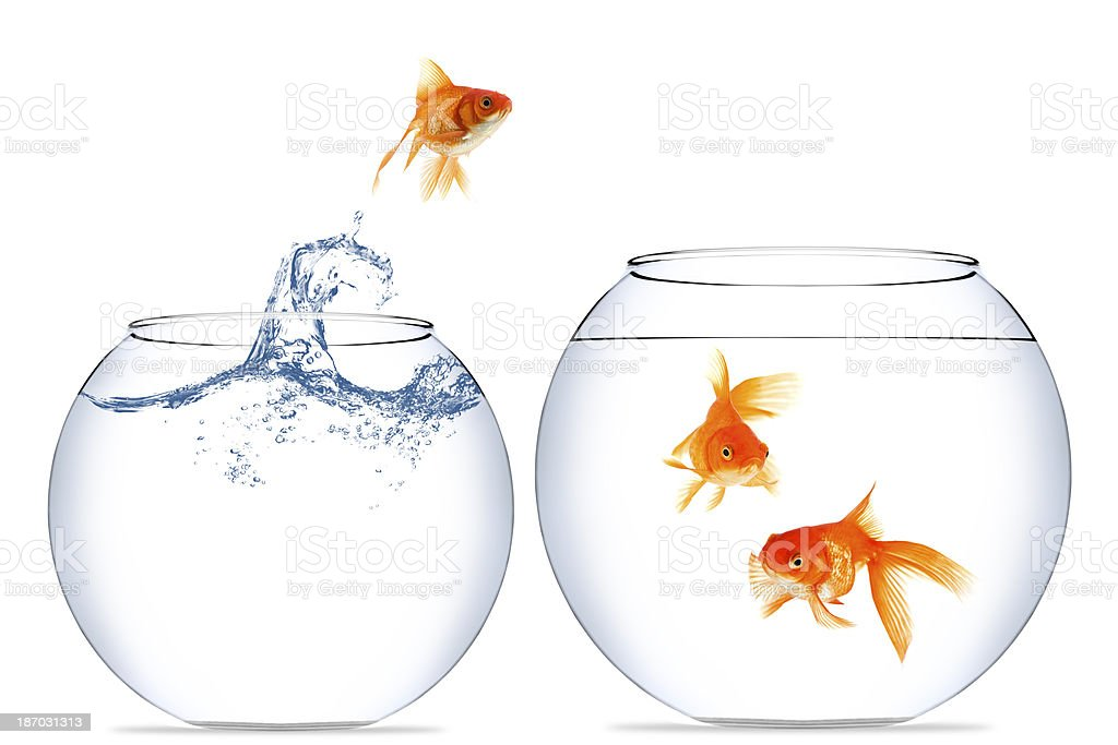goldfisch springen aus dem wasser stock fotografie und. Black Bedroom Furniture Sets. Home Design Ideas