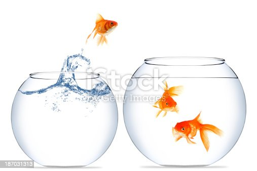 istock Goldfish jumping out of the water 187031313