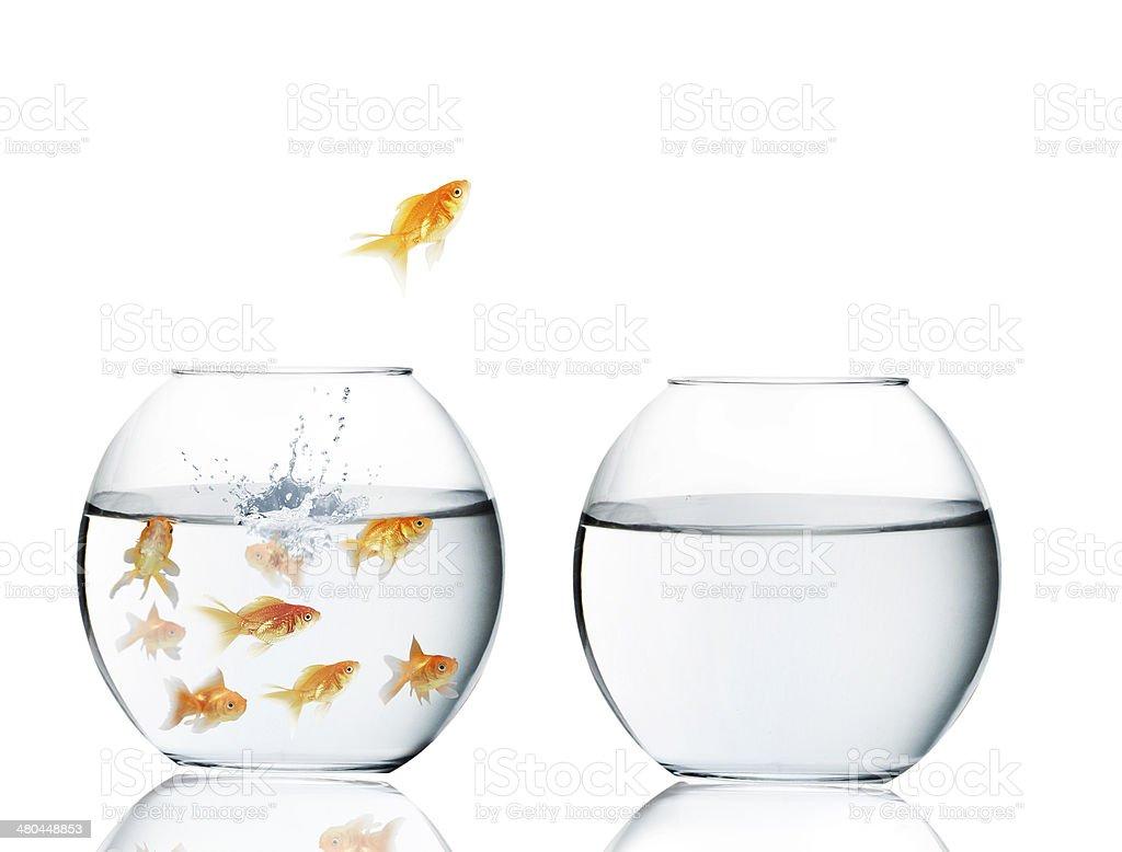 Poisson rouge sautant hors de leau photos et plus d for Aquarium poisson rouge changer l eau