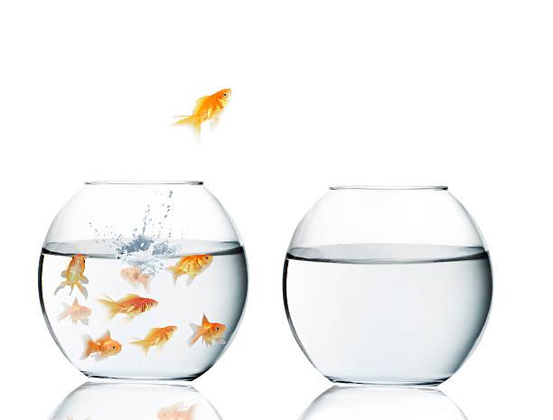 goldfish jumping out of  water - claustrofobie stockfoto's en -beelden