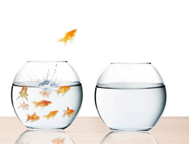 Goldfisch springen aus dem Wasser – Foto