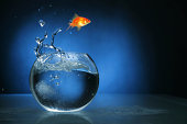 Goldfish jumping, lited with blue light. http://www.lisegagne.com/images/stilllife.jpg