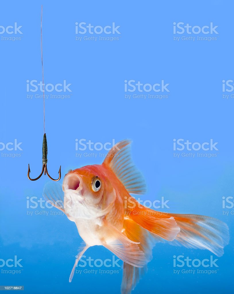 Goldfish looking to the fishhook stock photo