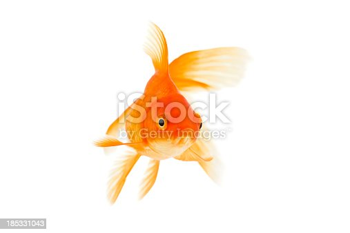 Goldfish on a white background. XXXL