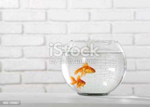 istock goldfish 466169697