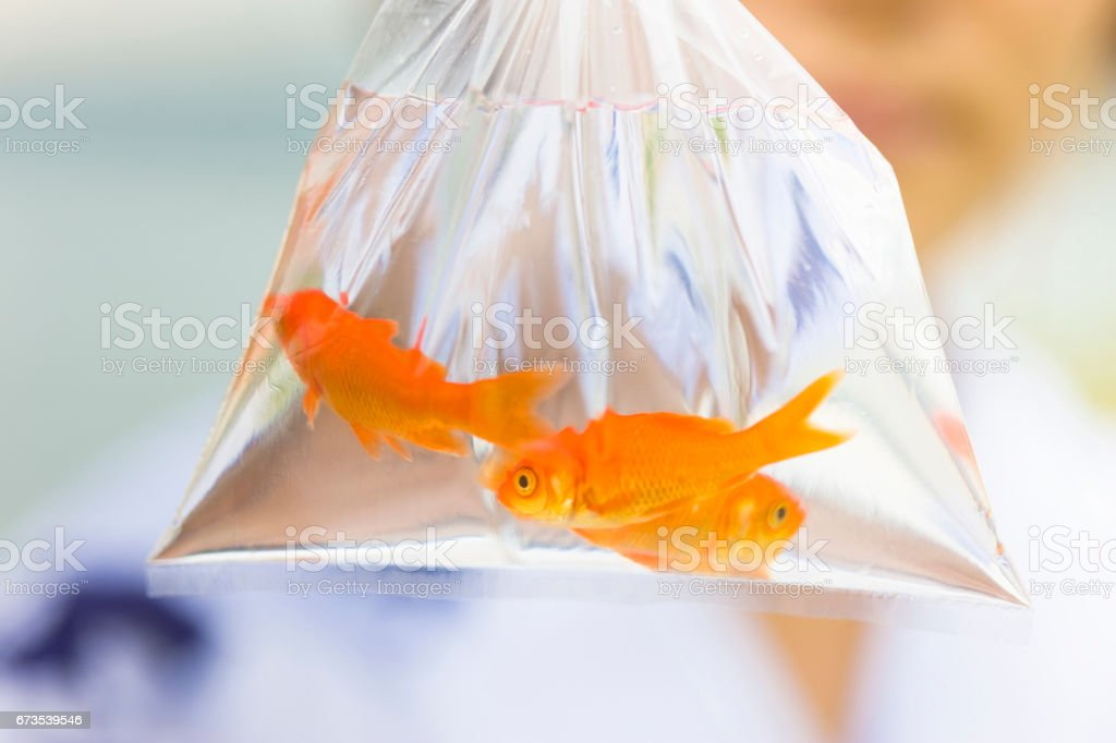 Goldfish royalty-free stock photo