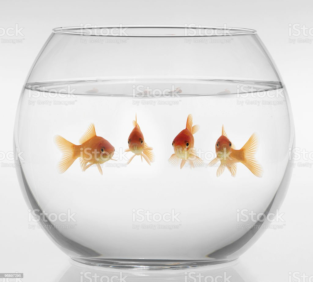 pesce rosso royalty-free stock photo