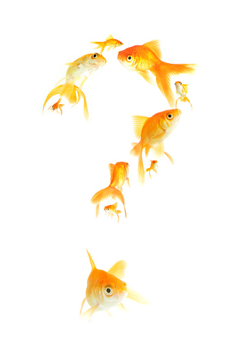 Questions about fish?  Stock image with goldfish swimming in a question mark