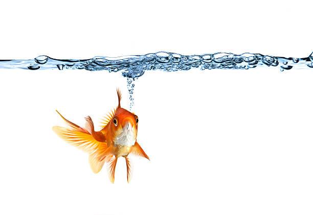 poisson rouge fait de bulles d'air - poisson rouge photos et images de collection
