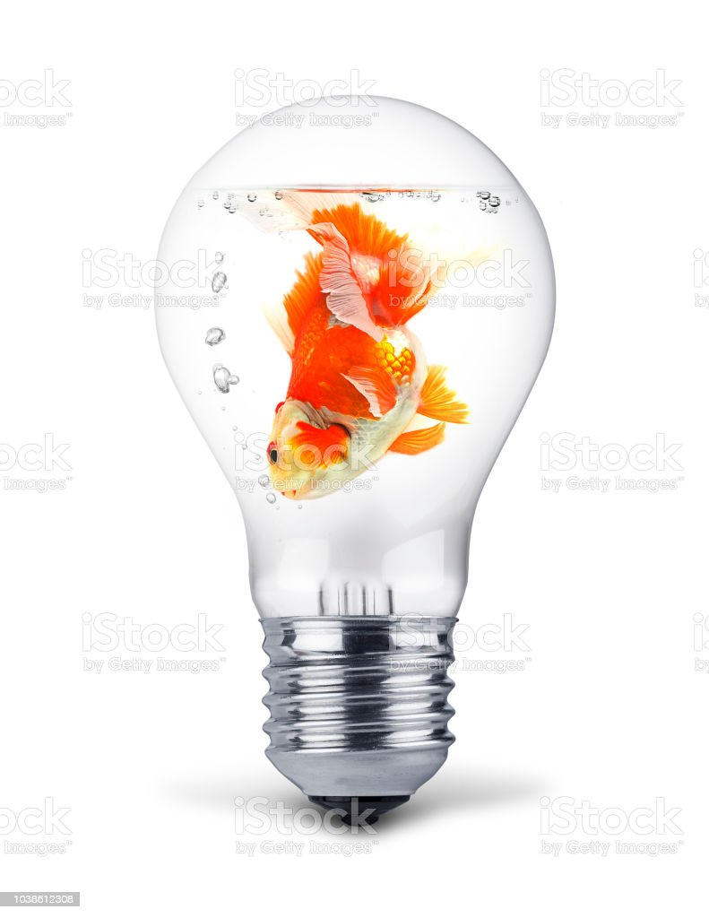 Goldfish Swimming In Light Bulb On White Backgroundgold Fish