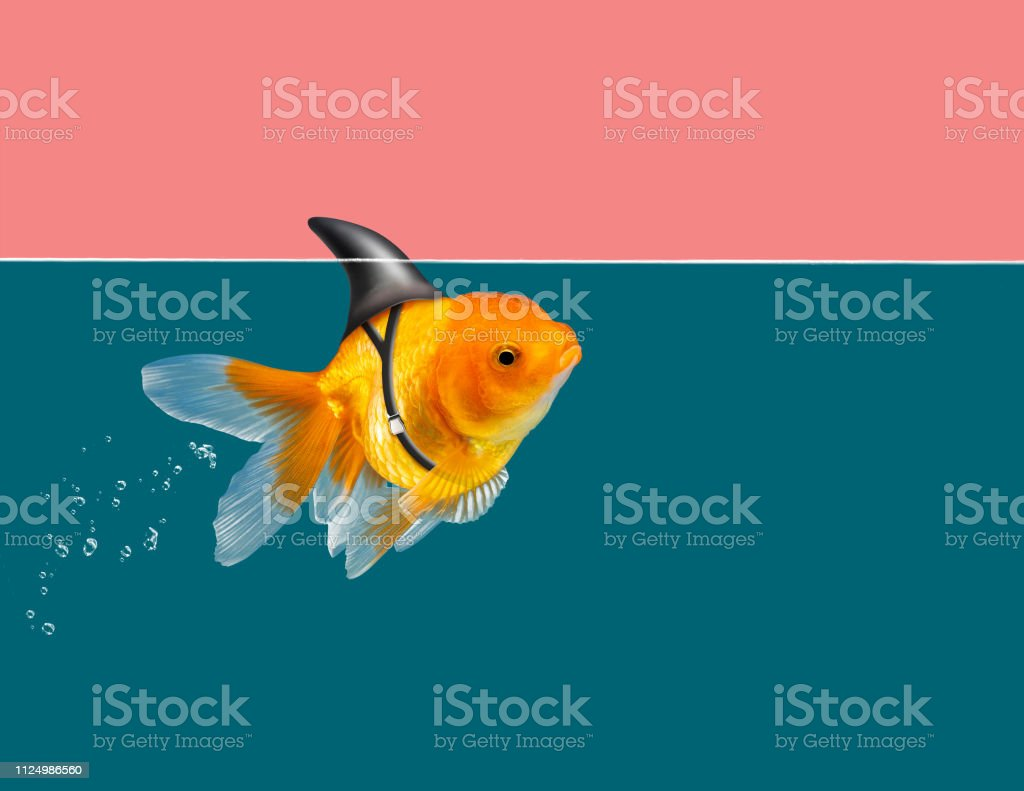 Goldfish With Shark Fin Swimming In Green Water And Pink Sky